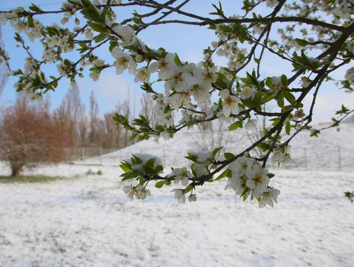 Jaro se sněhem