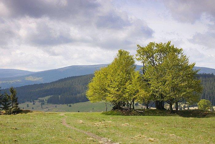 Zhůří - Šumava