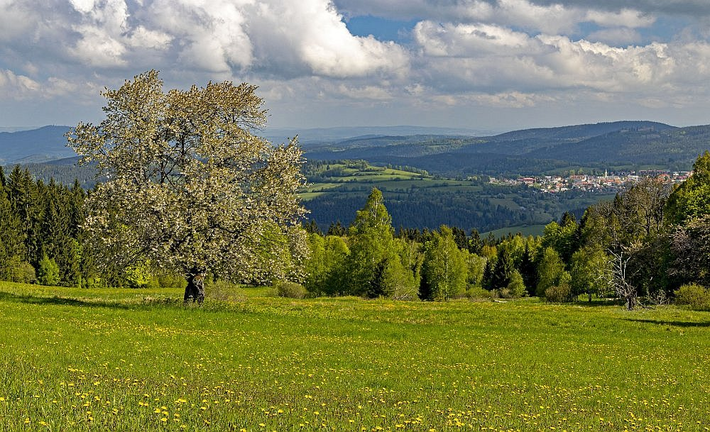 Jaro na Šumavě