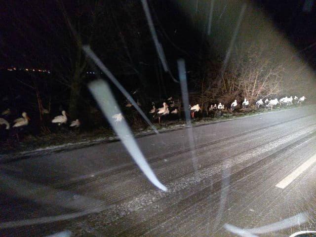Sníh Čápi