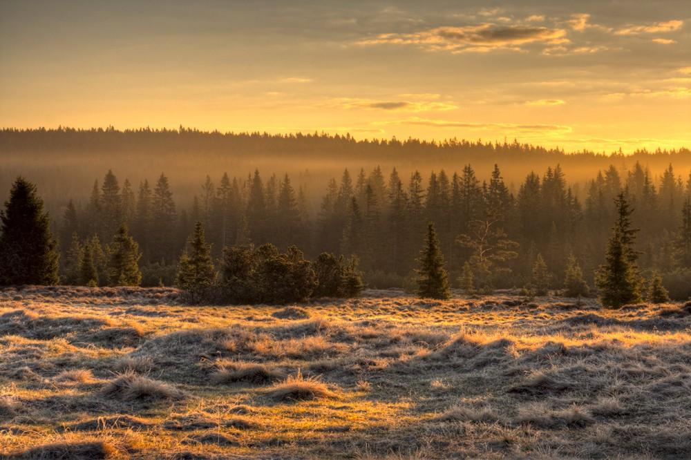 Šumava - Tříjezerní slať