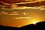 Zlaté z nebe