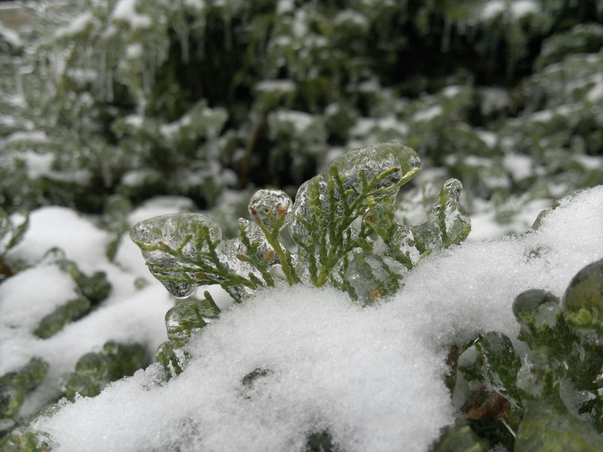Jehličí v ledu