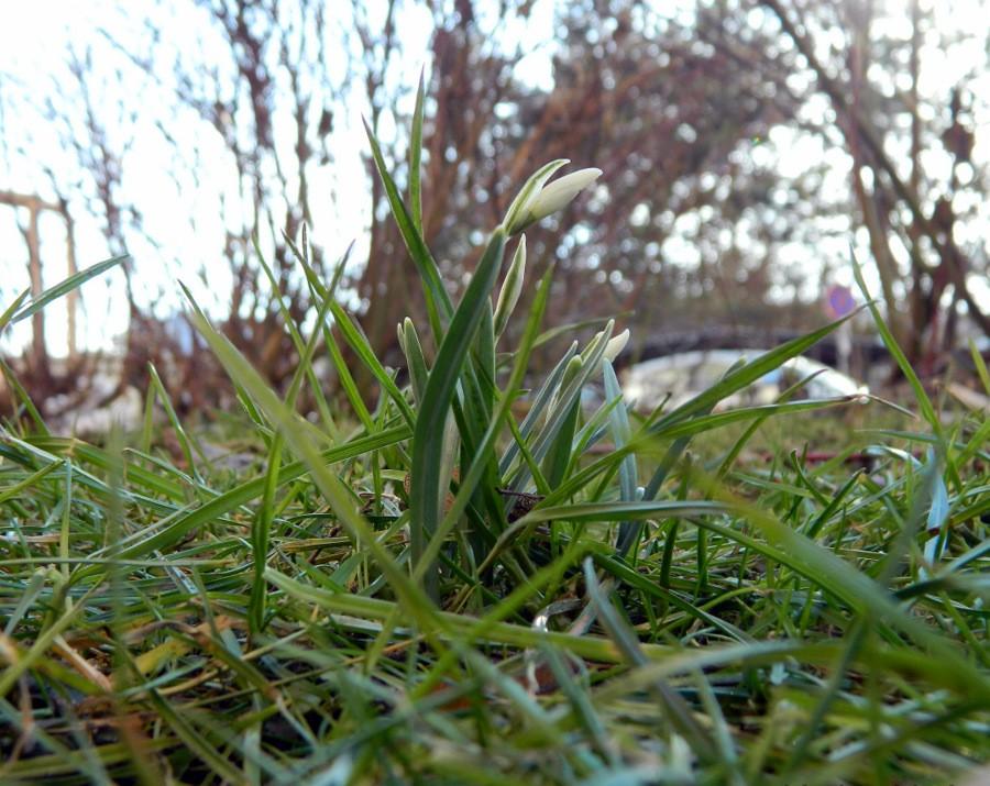 První posel jara