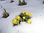 Něžná síla jara