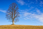 Kepelské Zhůří - strom