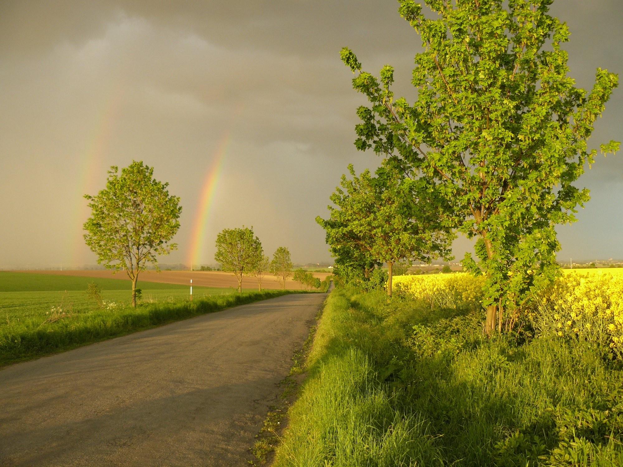 Cesta do deště
