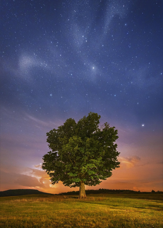 Strom v bouři