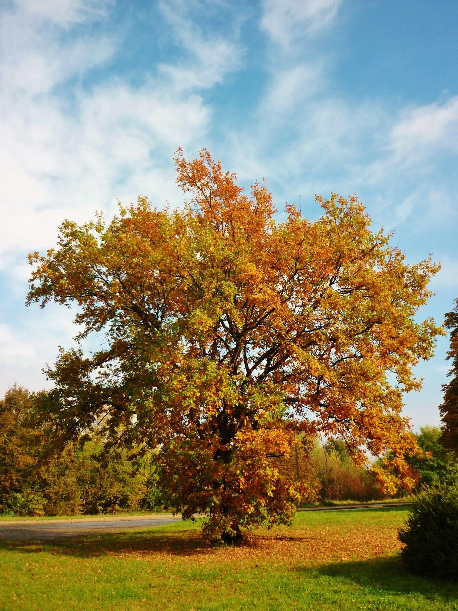 Podzim v Neratovicích