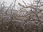 Keř obalen ledem - 2.12.2014 12:05