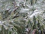 Led na stromech - 2.12.2014 11:57