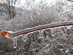 Větvičky obalené vrstvou ledu