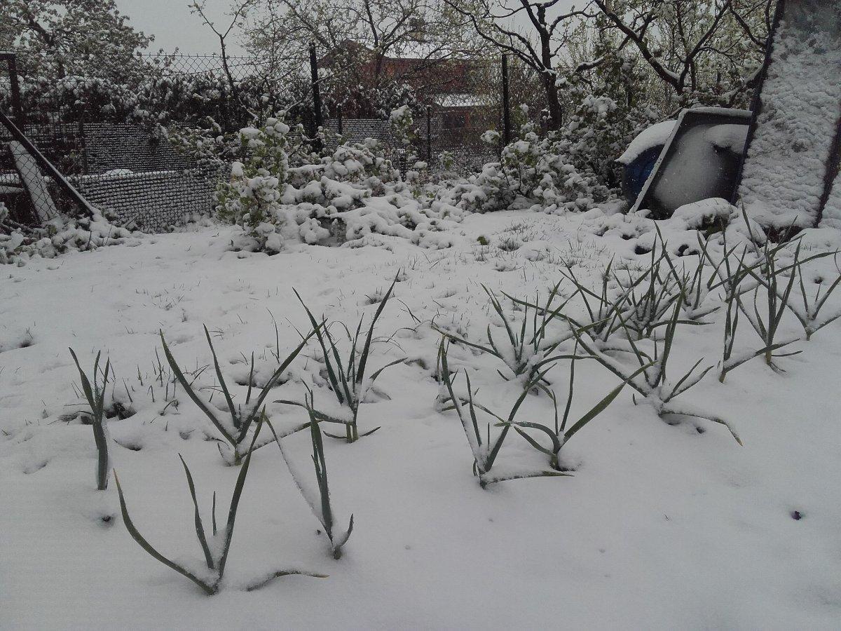 Počasí Chlebovice